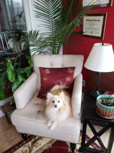 Singing Lessons in Yonkers, NY with Max, the Pomeranian